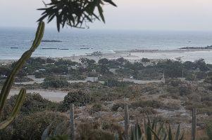 Strand und Str�ucher in Elafonisi
